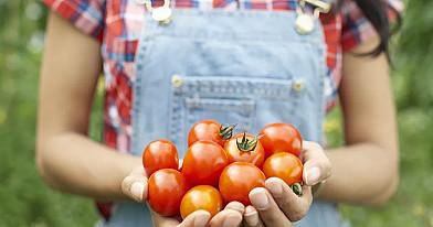 Pernai pirmą kartą šitaip patręšiau pomidorus, dabar visi kaimynai daro tą patį!